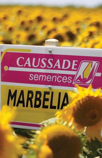 Marbelia CL